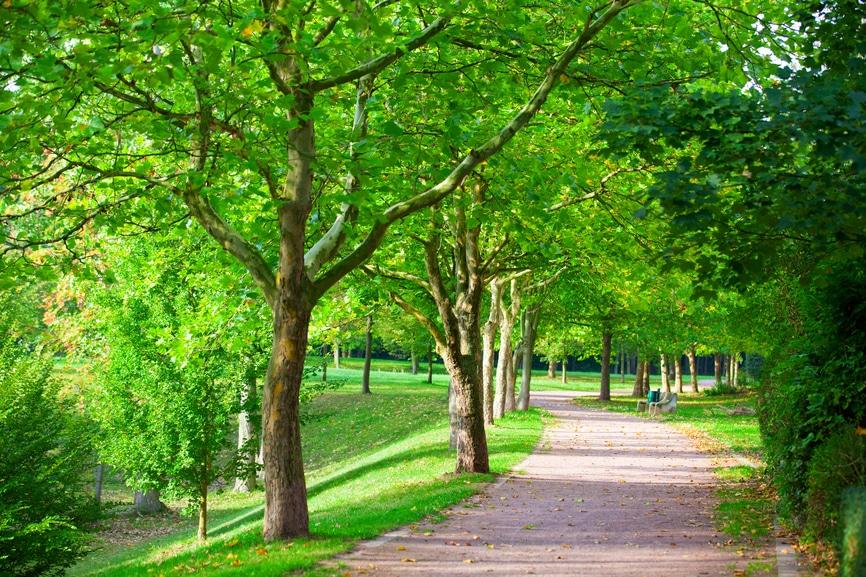 Spazierweg im Park, gesäumt mit grünen Bäumen